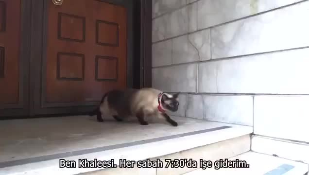 Mansur Yavaş'tan, Melih Gökçek'e kedili 'fışkiye' göndermesi