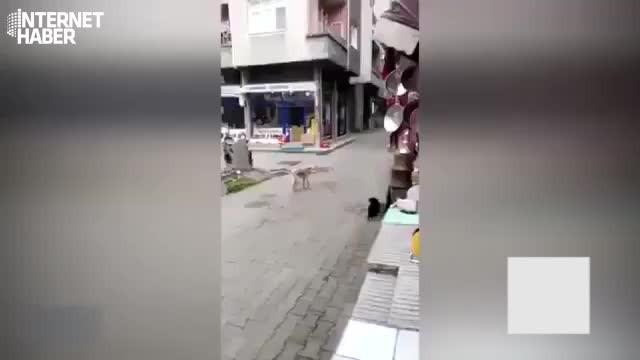 Trabzonlu kedi, köpeği böyle kovaladı