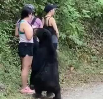 Parkta karşılaştıkları ayı ile selfie çektiler!