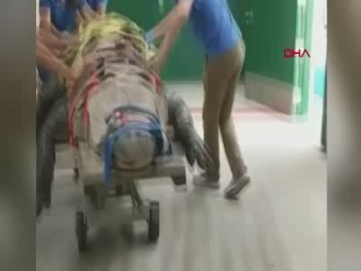 ABD'de 300 kiloluk timsahın tedavi görüntüleri 1,5 milyon kez izlendi