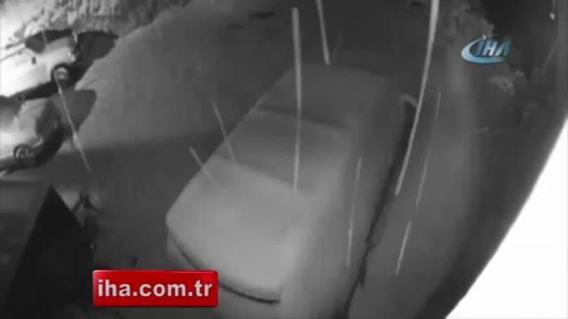 Otomobil meraklısı ayı: Kapıyı açıp içeri girdi