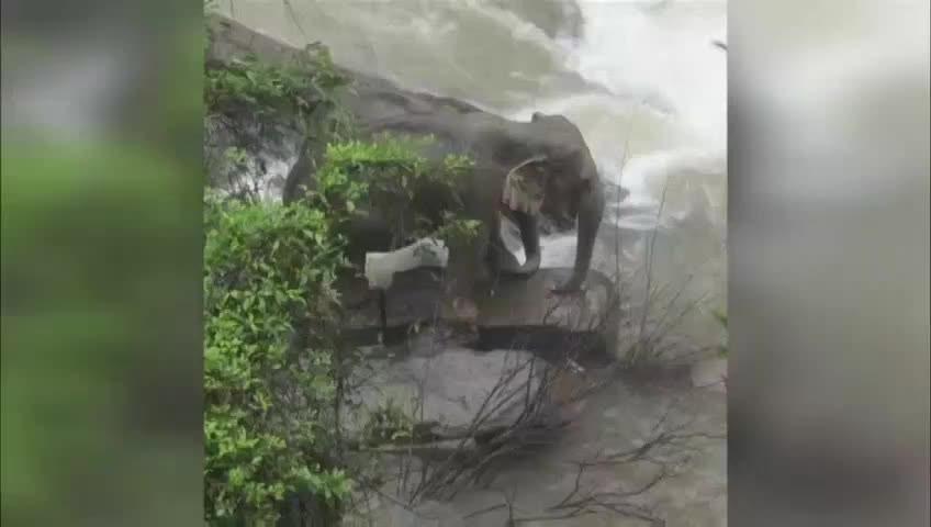 Tayland'da 'şelaleden düşen yavru fili kurtarmaya çalışan' 11 fil öldü